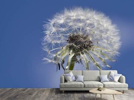 Photo Wallpaper The dandelion in XXL