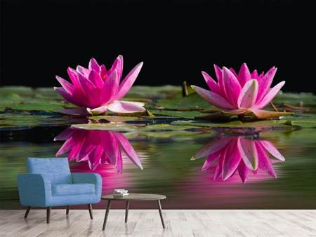 Fotomurale Water Lilies Duo in rosa