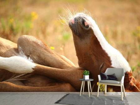 Photo Wallpaper The sleeping horse