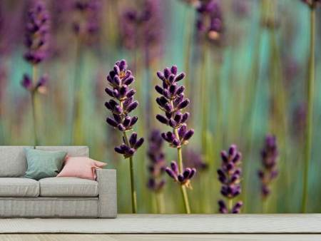 Photo Wallpaper Lavender in XL