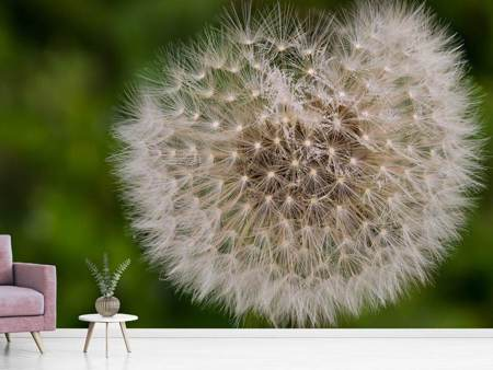 Photo Wallpaper The dandelion in nature