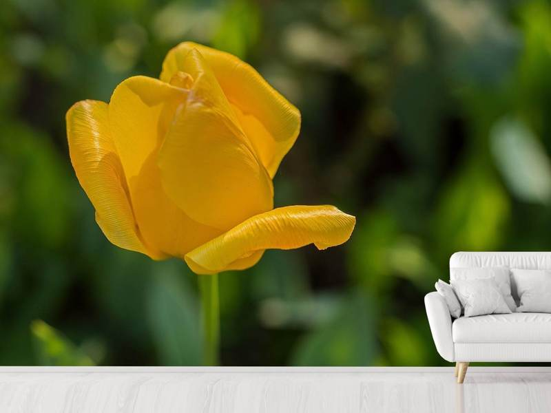 Photo Wallpaper Yellow tulip XL