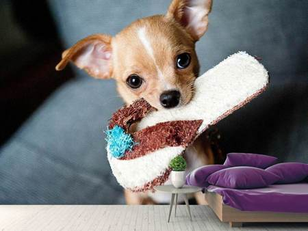 Photo Wallpaper Obedient chihuahua