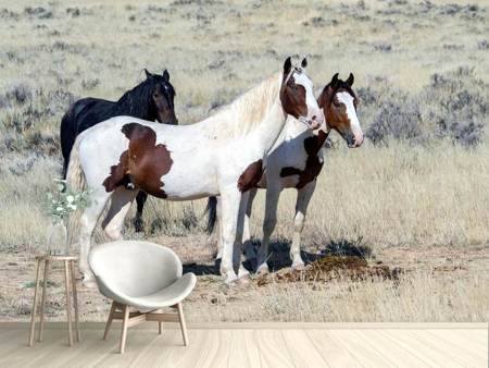 Photo Wallpaper 3 wild horses