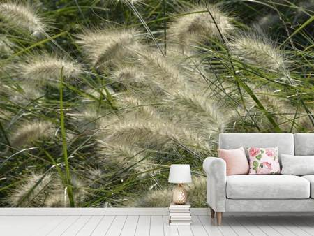 Photo Wallpaper Ornamental grass in the wind