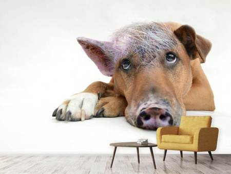 Photo Wallpaper The funny pig dog