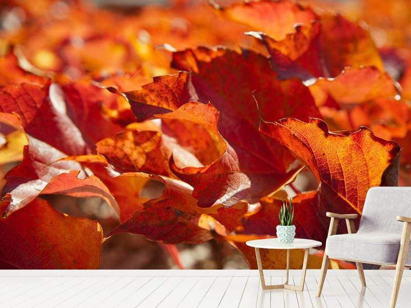 Photo Wallpaper Nice autumn leaves