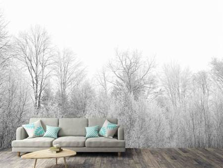 Photo Wallpaper Birches in the snow