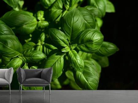 Photo Wallpaper Basil in XL