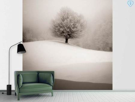 Photo Wallpaper Winter Degradee