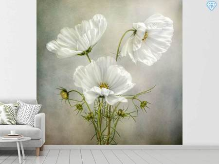Photo Wallpaper Cosmos Charm