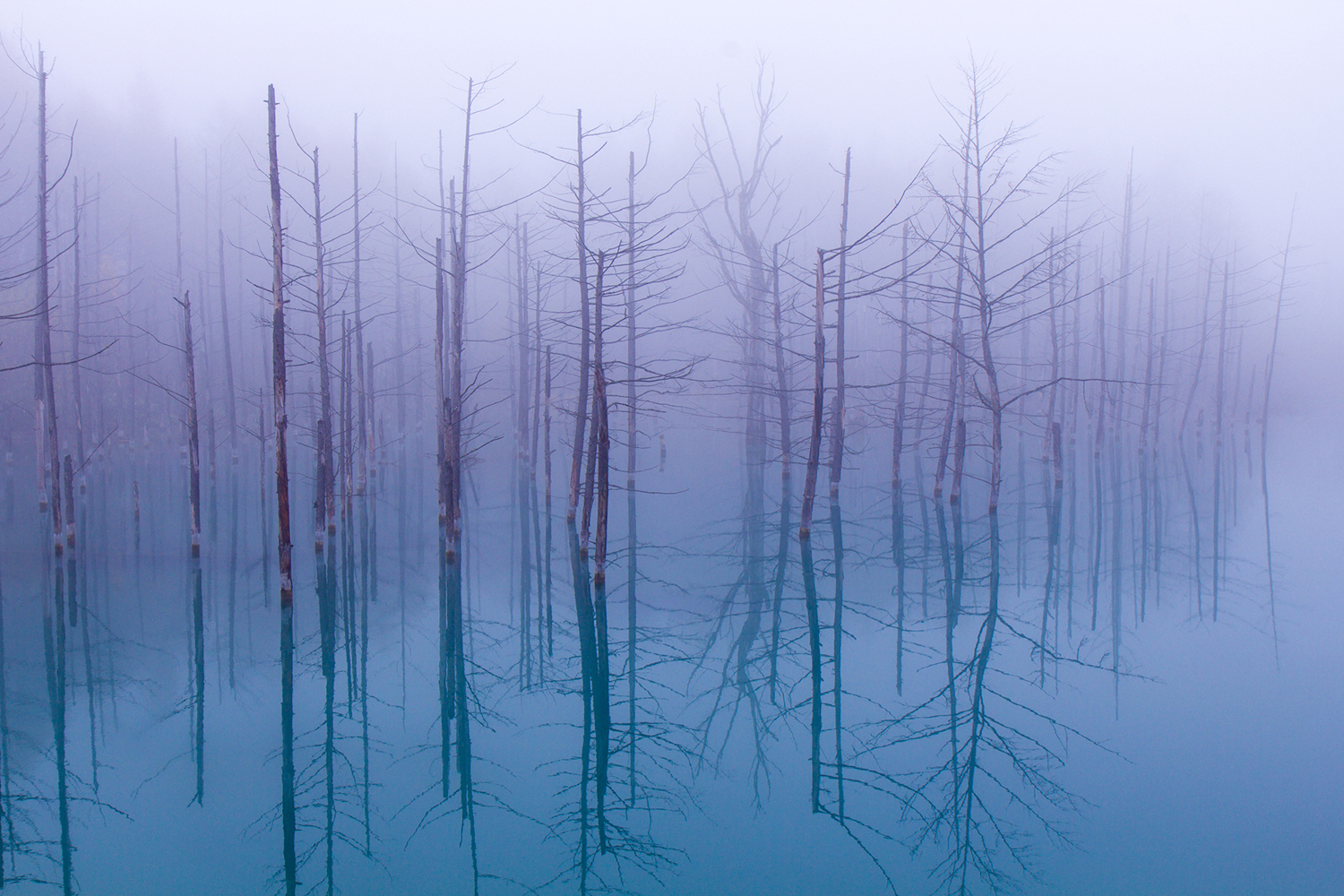 Papier peint photo Misty Blue Pond