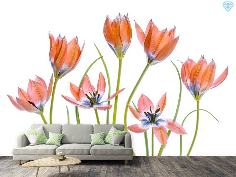 Papier peint photo Apricot Tulips