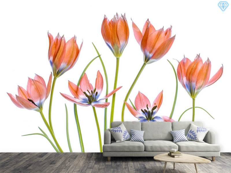 Photo Wallpaper Apricot Tulips
