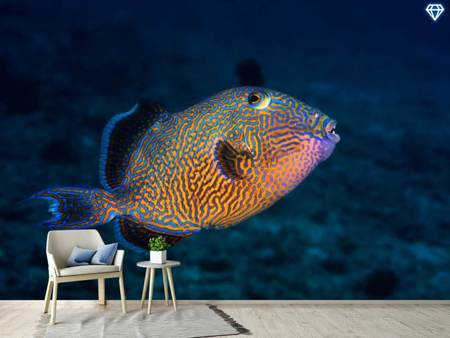Photo Wallpaper Blue Triggerfish