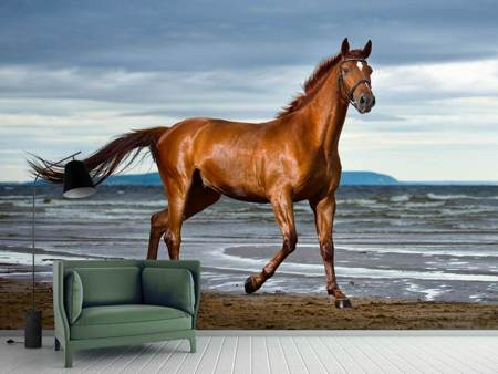 Photo Wallpaper A Thoroughbred At The Sea